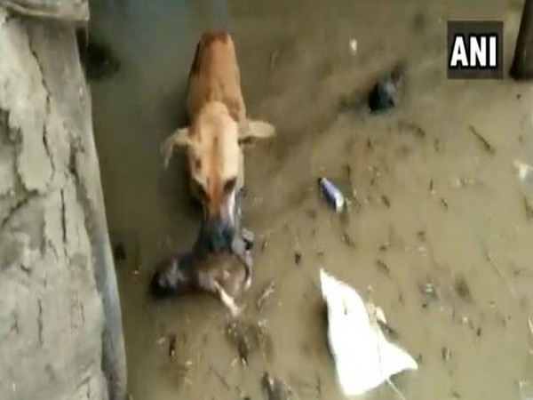 Dog rescues pup from Karnataka's flood-affected village