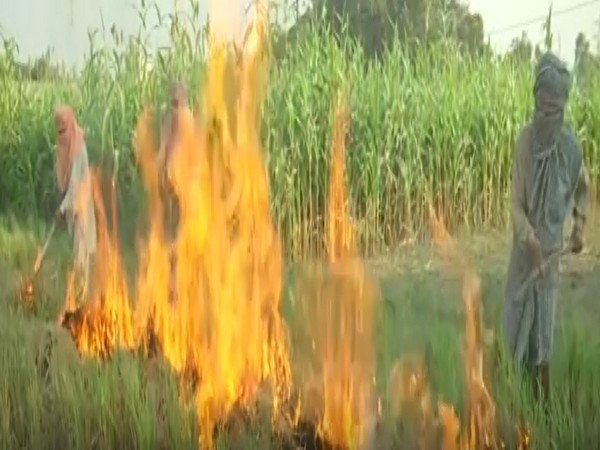 Punjab farmers continue to burn stubble as alternative methods are expensive