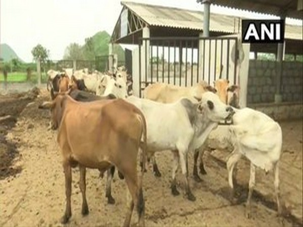 Shivraj Singh Chouhan announces formation of 'Cow Cabinet' in Madhya Pradesh