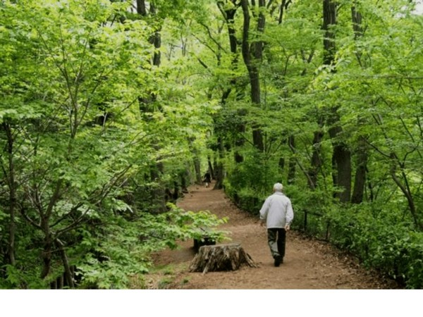 Study suggests regular dose of nature may improve mental health during COVID-19 pandemic