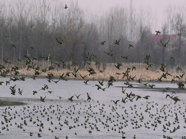 Bird Flu: Surveillance at Rajaji Tiger Reserve increased