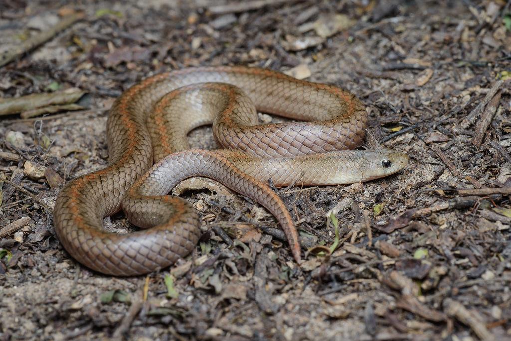 Farmer dies of snakebite in Thane village