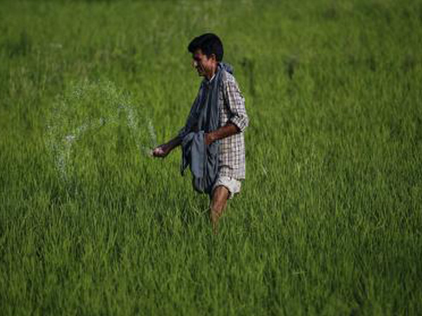 Farmers can avail crop loan without insurance