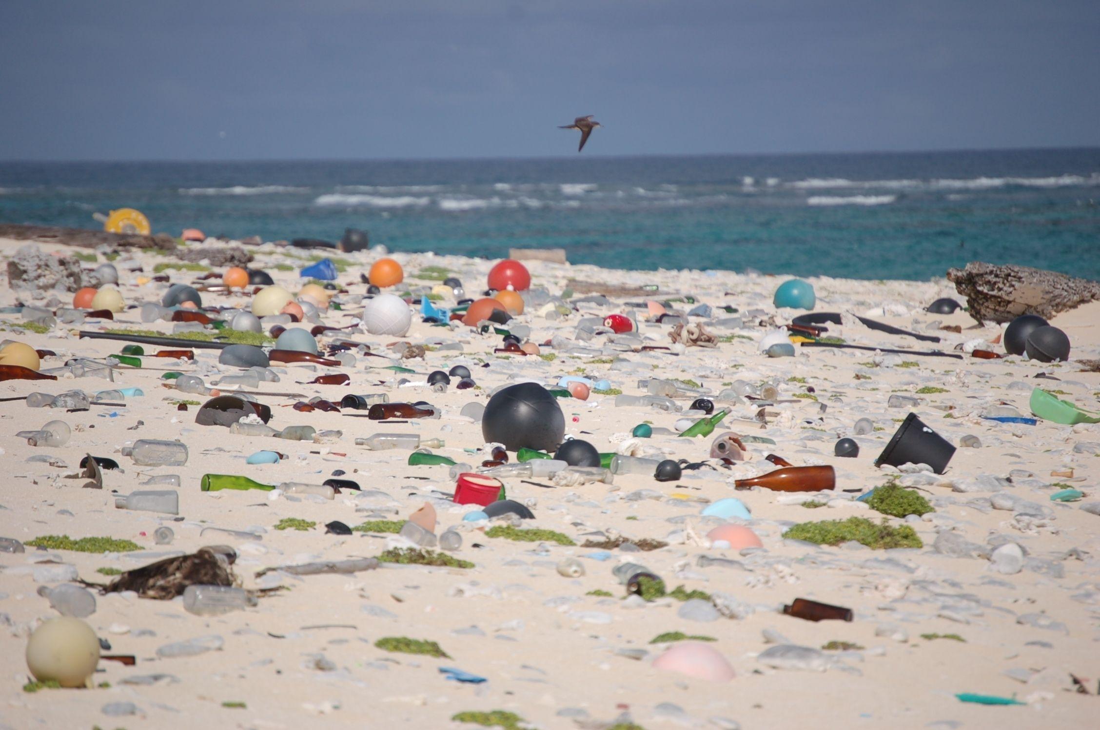 Marine life near Goa beaches degrading due to tar balls: Study