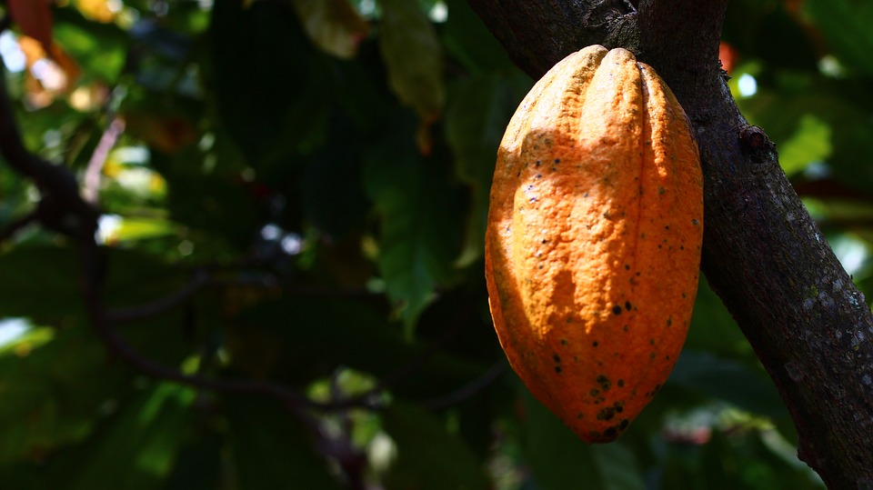 """Mars aims to tackle """"broken"""" cocoa model with new sustainability scheme"""
