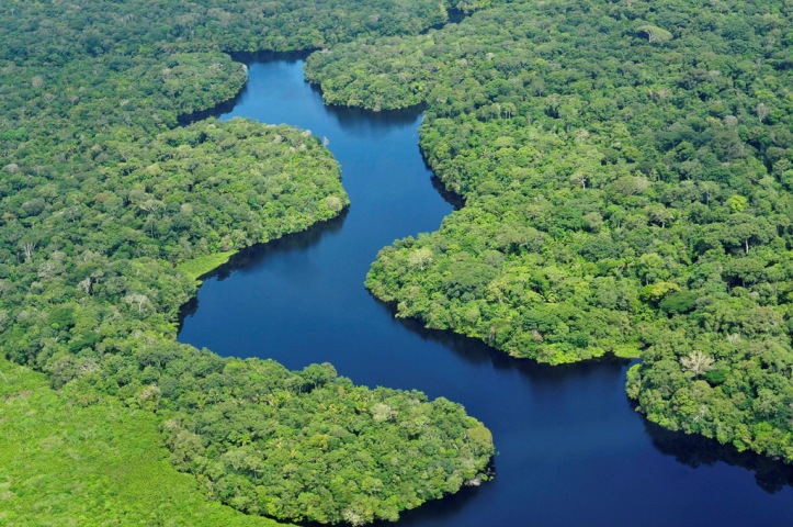 FEATURE-Battling 'biopiracy', scientists catalog the Amazon's genetic wealth