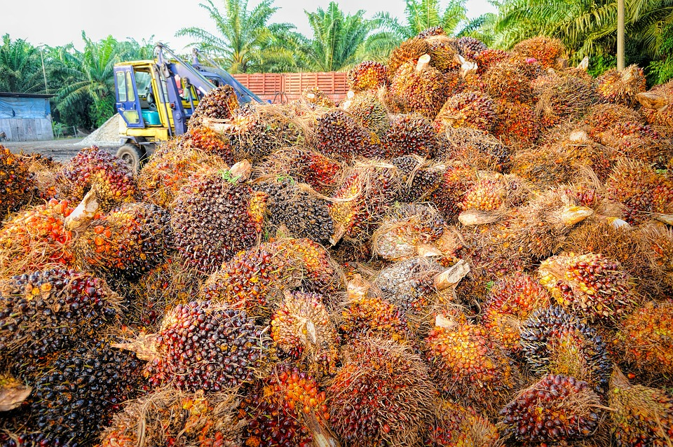 India agrees to cut import duties on Indonesian palm oil