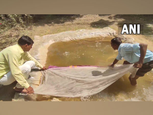 Gambusia fish released in Moradabad ponds to curb dengue