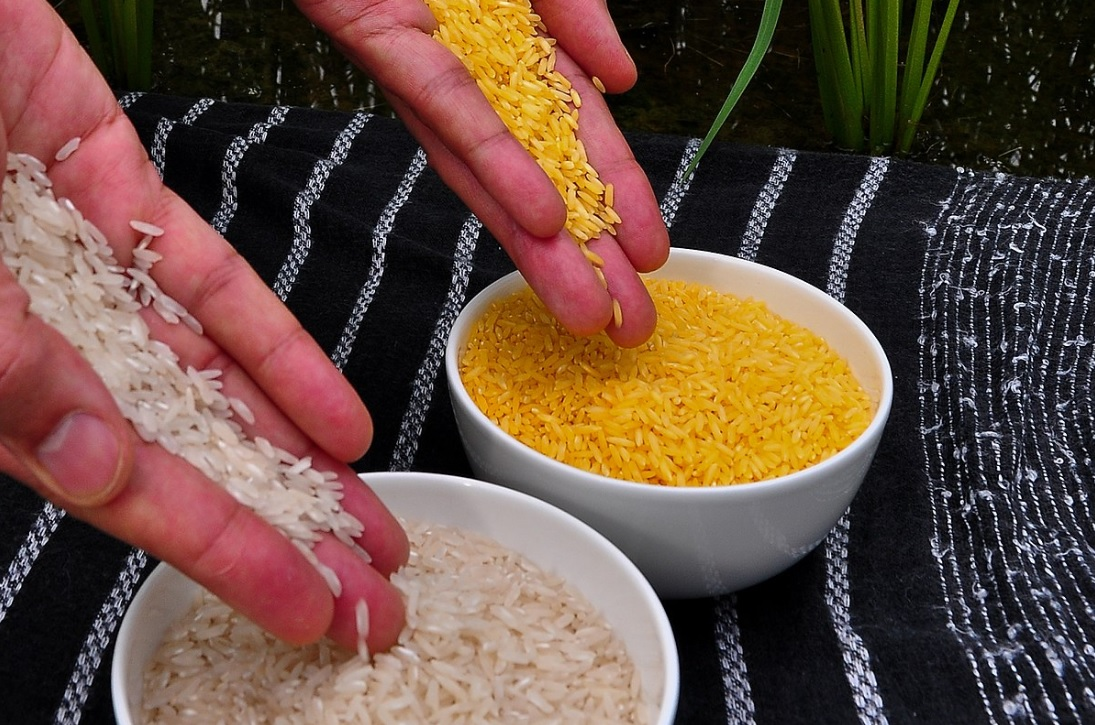 Fight against childhood blindness: Bangladesh soon to become first to cultivate golden rice