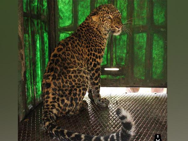 Leopard shot dead hours after killing woman in U'khand village