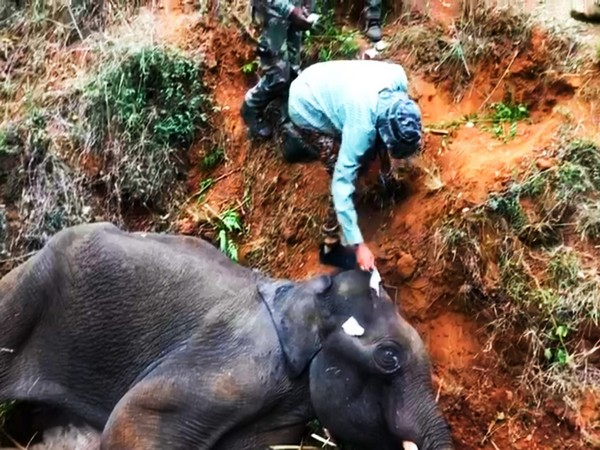 Another elephant dies of electrocution in West Bengal