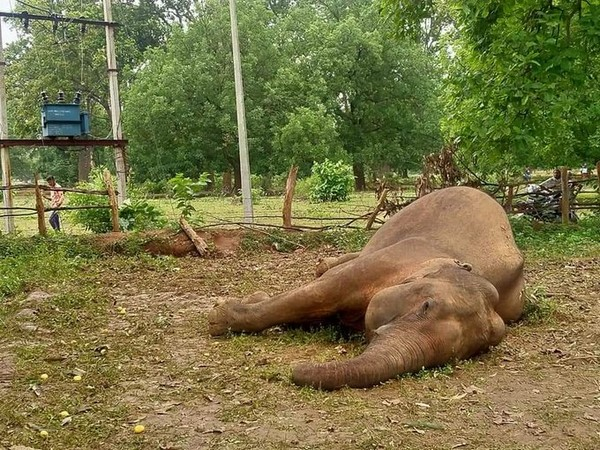 282 elephants, two tigers, 15 leopards died since 2018 in Odisha: Govt