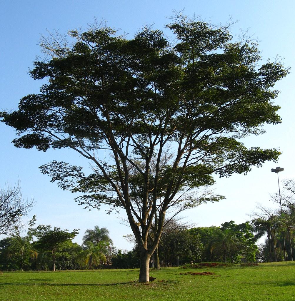 Indigenous protestors seek Norwegian 'asylum' for Brazilian tree