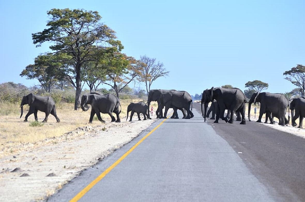 Namibia culls ten 'dangerous' elephants to protect farmers, crops