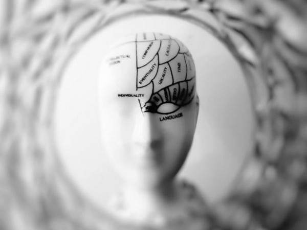 New research finds how associative memories are formed
