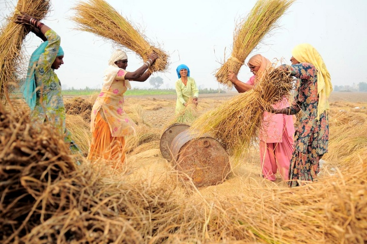 Punjab seeks hike in MSP of rabi crops