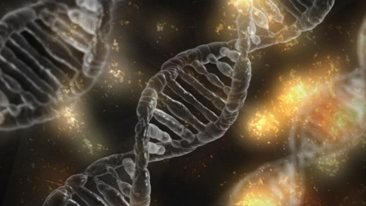 First US murder trial using DNA, family tree evidence