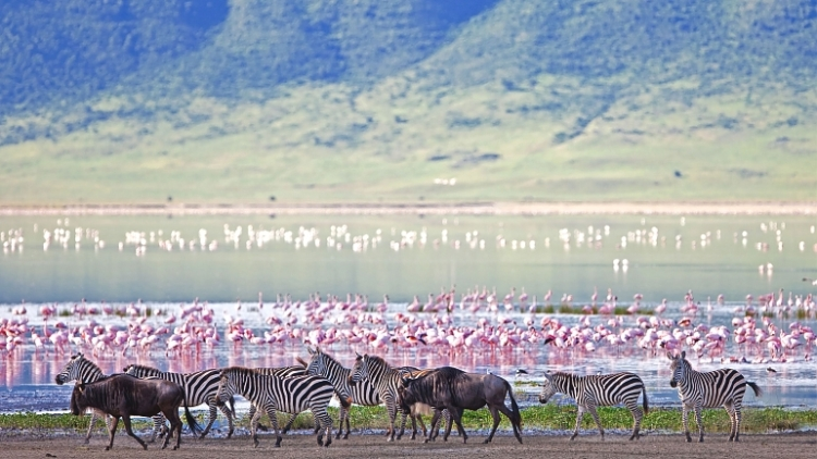 SANParks welcomes report on management of wildlife
