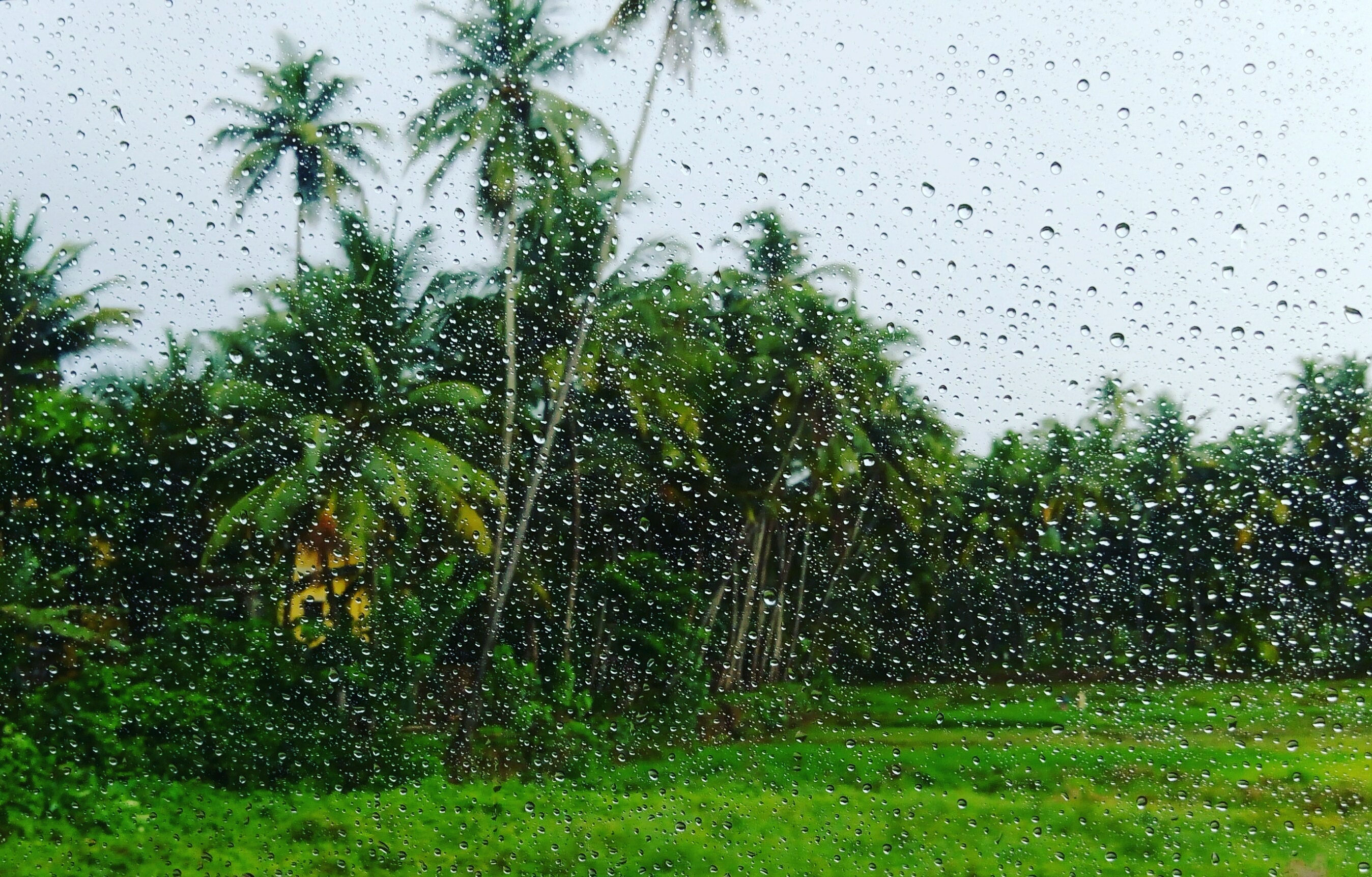 Monsoon catches up in Kerala; depression over Arabian sea likely
