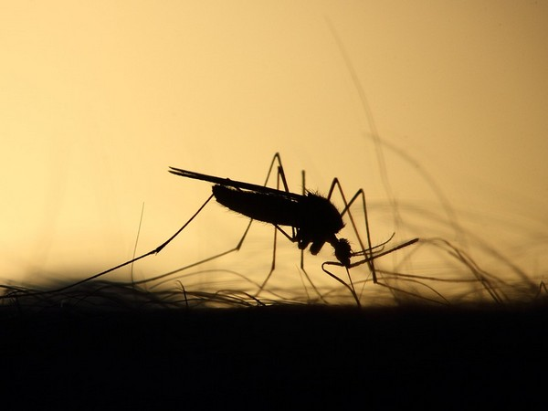 More than 200 people test positive for dengue in J&K