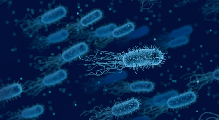 Science News Roundup: Gut bacteria tied to disease severity, immune response; high mental health toll seen in ICUs
