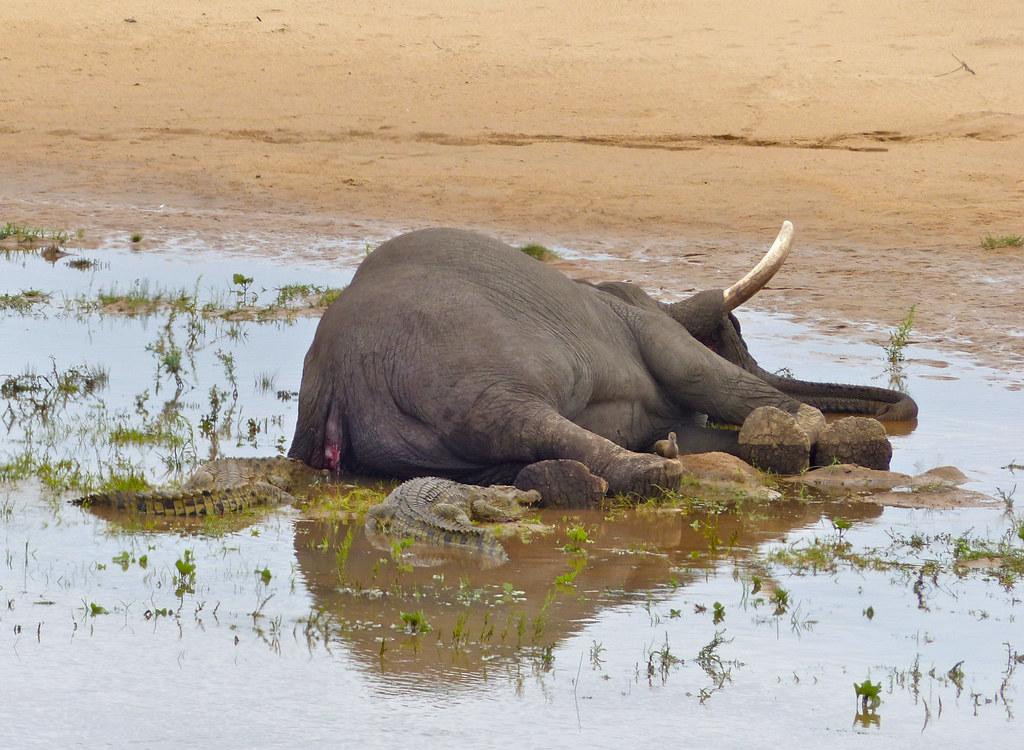 Carcass of female elephant found in Odisha
