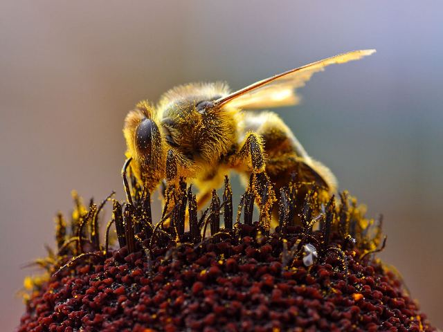 SCCF announces £50,000 funding for Bees for Development charity