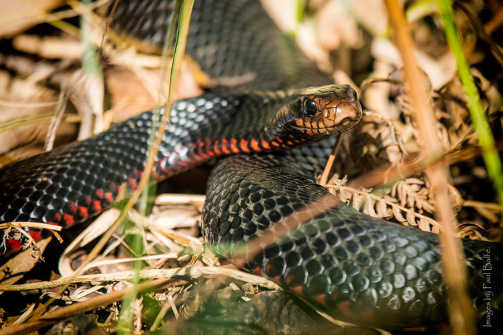 Snake orgy prompts partial closure of Florida city park