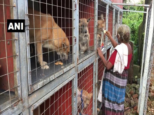 Elderly woman in Kottayam takes care of over 60 street dogs