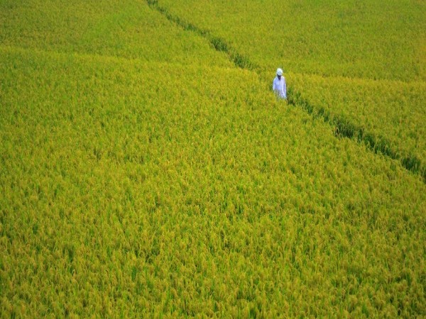 Govt to soon launch one-stop-shop for agri data: Agri Min official