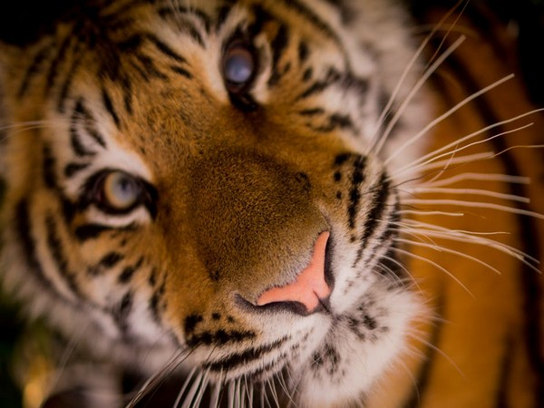Corbett Tiger Reserve management model best for all tiger reserves in India: Rudy