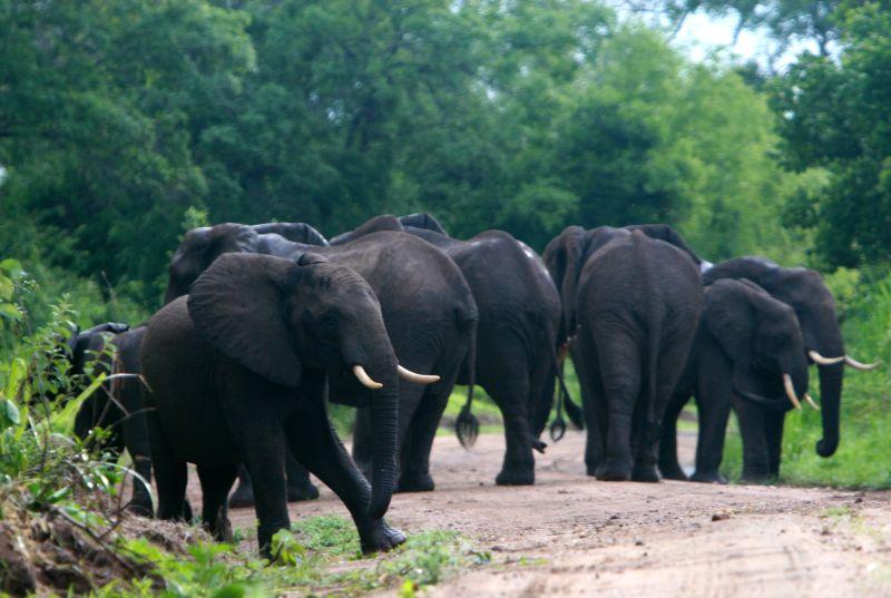 Tanzania's Selous Game Reserve might lose UNESCO World Heritage status - IUCN