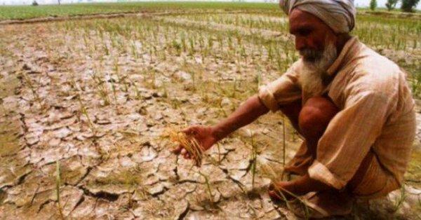 Central team touring Maha to assess crop damage