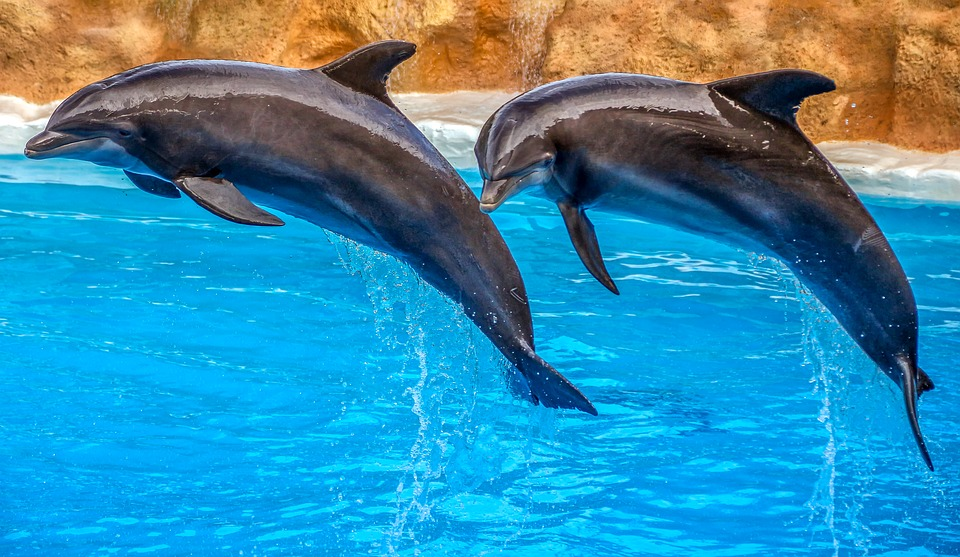 Dolphins form friendships through shared interests, just like humans: Study