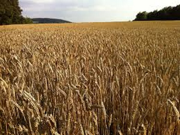 Government exempts agriculture-farming from lockdown to ensure harvesting of crops