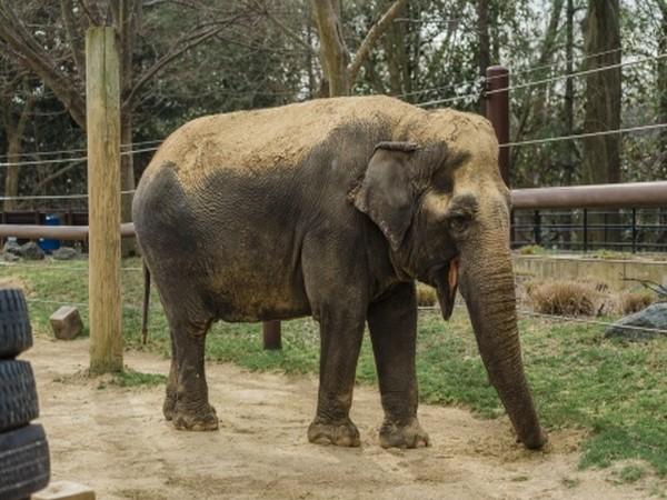 Jumbo released from elephant shelter