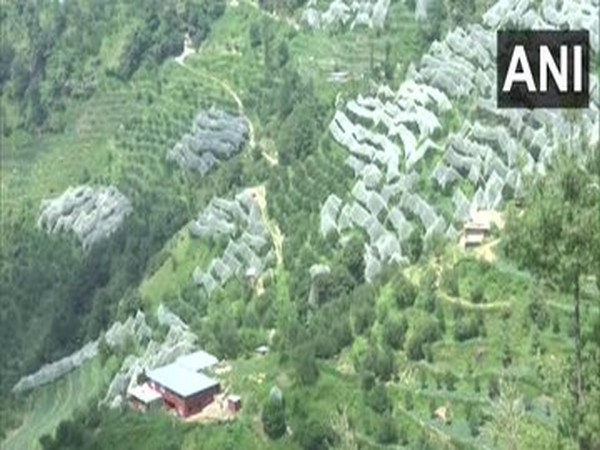 Shimla's apple growers complain of labour crunch due to COVID-19 ahead of plucking season