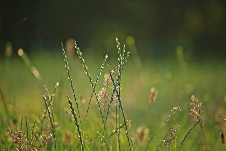 Herbal Remedies Are Making a Big Comeback