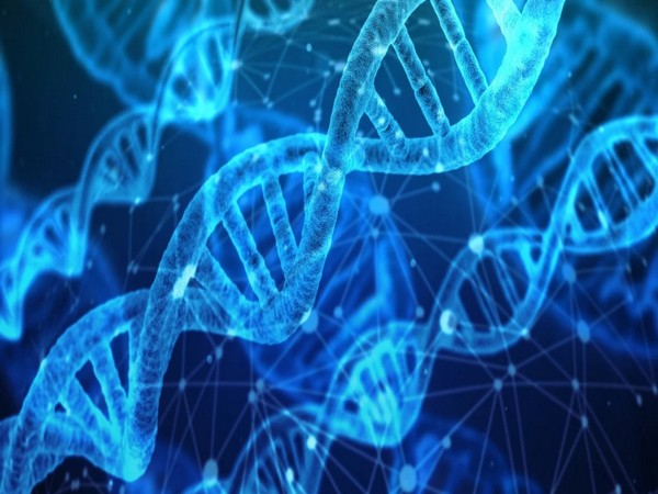 Study suggests dynamic twists, loops can enable DNA to modulate its function
