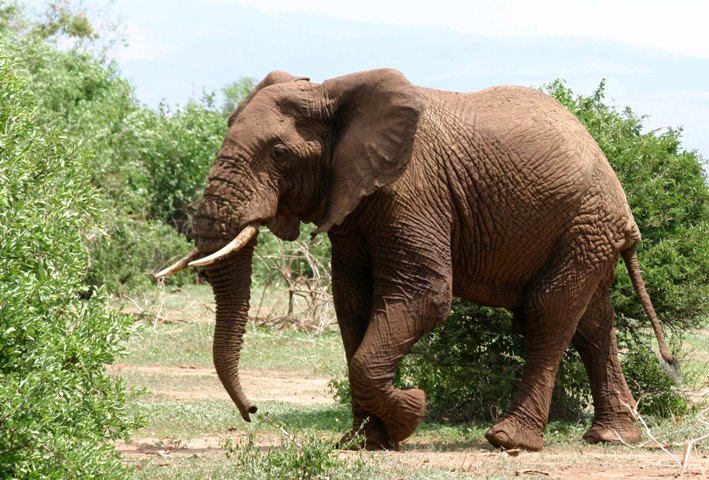 Elephants: the jumbo surprise outside Nigeria's megacity