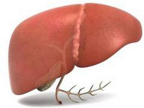 Rate of liver cancer increasing globally: Study