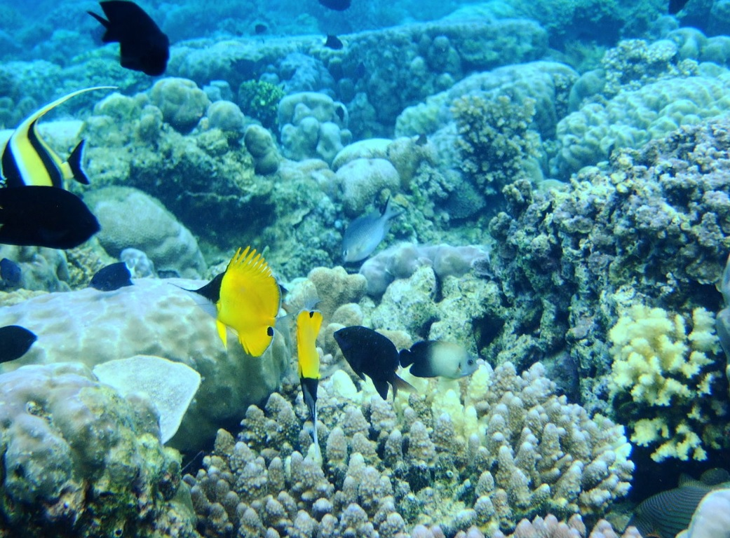 UNESCO to launch appeal for underwater heritage during Int'l conference