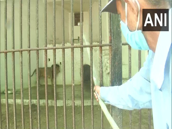 Vadodara's Sayaji Baug Zoo makes arrangements for inmates to beat the heat