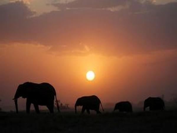 6 elephants killed by poachers in single day in Ethiopia