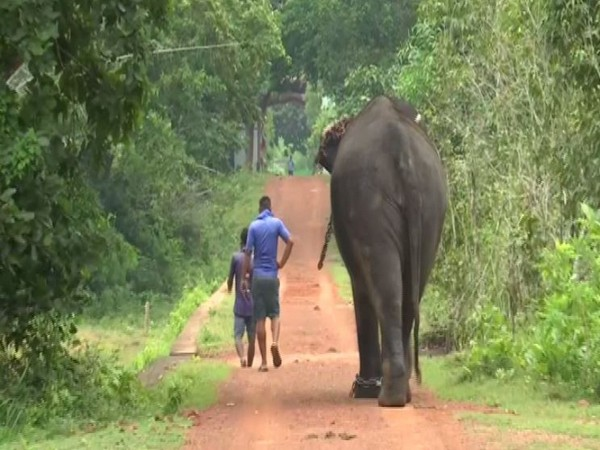 Chandaka-Dampara Wildlife Sanctuary to reopen from Oct 2