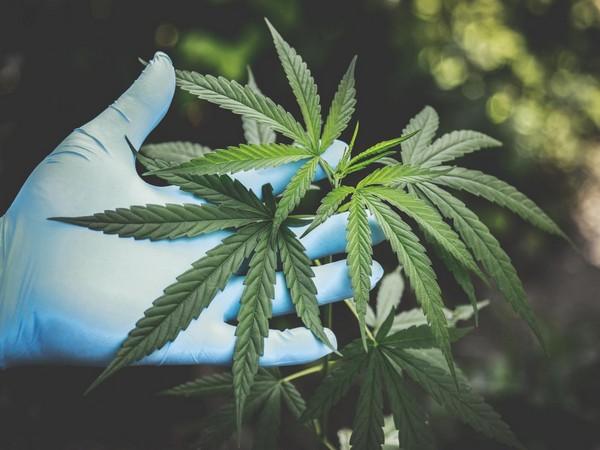 Second-hand marijuana smoke exposure linked to respiratory infections in children: Study